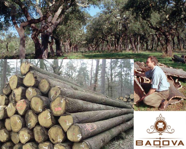 Cây gỗ sồi